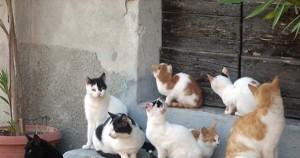 colonia_di_gatti