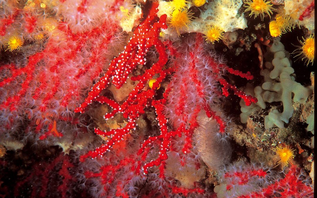 Oro rosso (1)